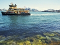 Next ferry arrives at Cremorne Point